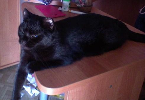 фото черный кот