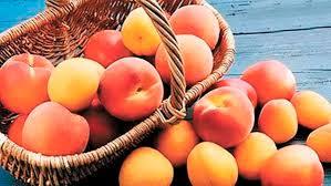 фото персиковое и абрикосовое масло