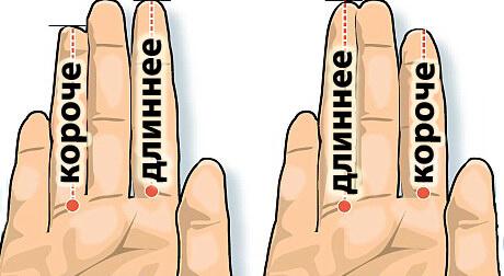 длина пальцев и характер фото