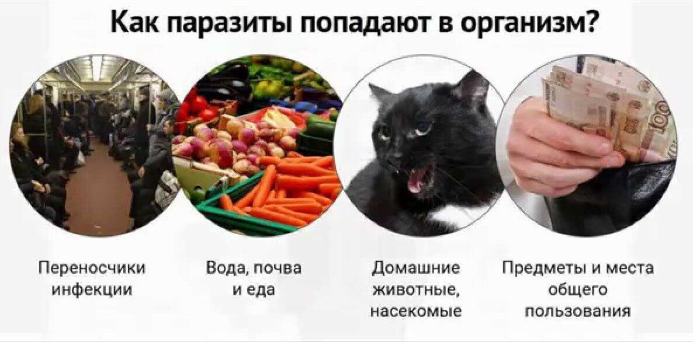 гельмифаг от паразитов цена в украине