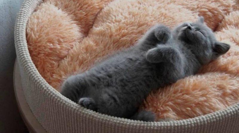 мертвый котенок фото