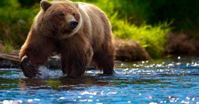 женщине медведь