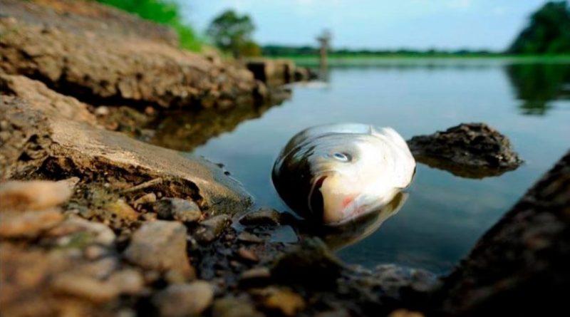 Мертвая рыба фото