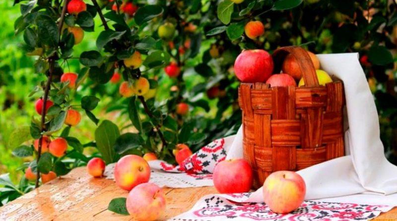 Сад с фруктами