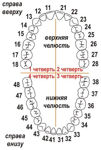 нумерация зубов схема