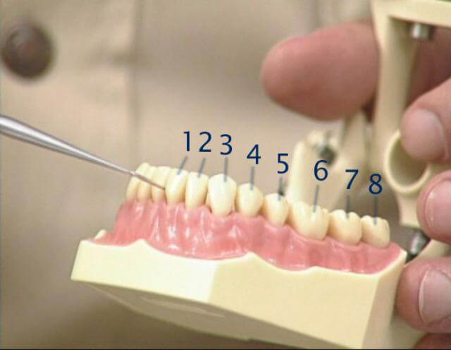 как нумеруют зубы стоматологи