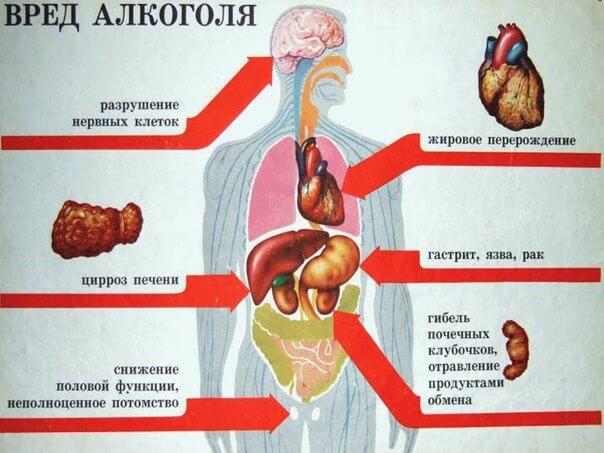 Фото вред алкоголя внутренним органам