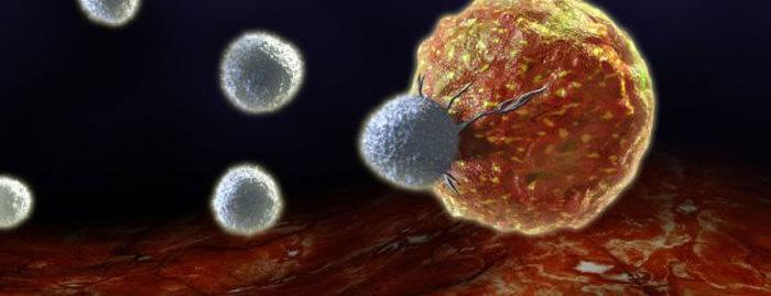 Слепая беспощадность лимфокиллеров к настоящей и мнимой угрозе