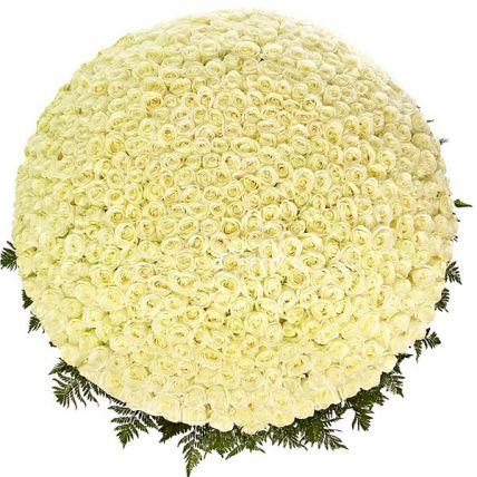 фото 1001 роза за 50т рублей