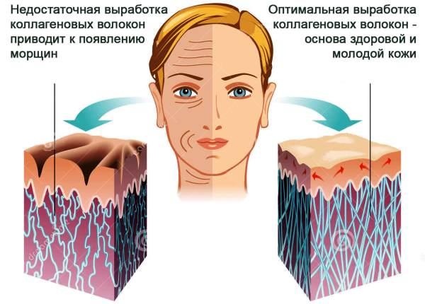 коллагеновые волокна на лице