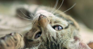 Список пород кошек с названиями и фото
