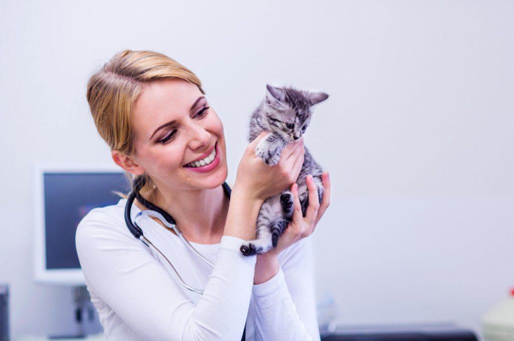 кошка у врача -ветеринара