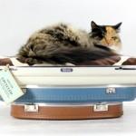 Лежанка для кошек 7