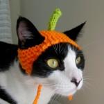 Одежда для кошек 3