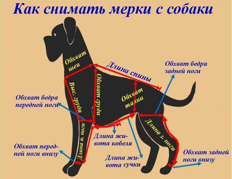 снятие мерок с собаки
