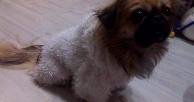 Вязание для собак или мастер класс мехового комбинезона для пекинеса