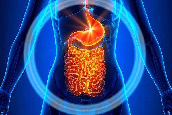 работа пищеварительной системы