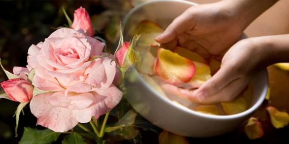 умывание лица отваром из розовых лепестков